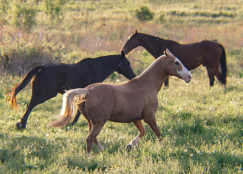 HorseSun3.jpg