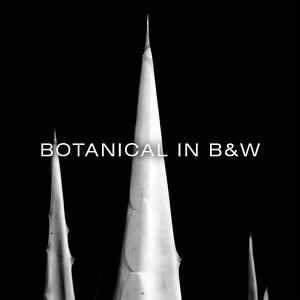 BOTANICAL IN B&W