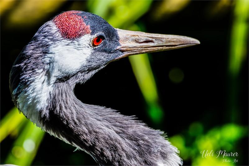 2016-09-07 Tierpark Goldau - 0U5A8662-Bearbeitet.jpg