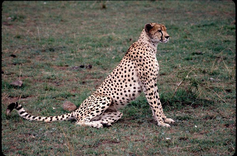 Kenya2_039.jpg