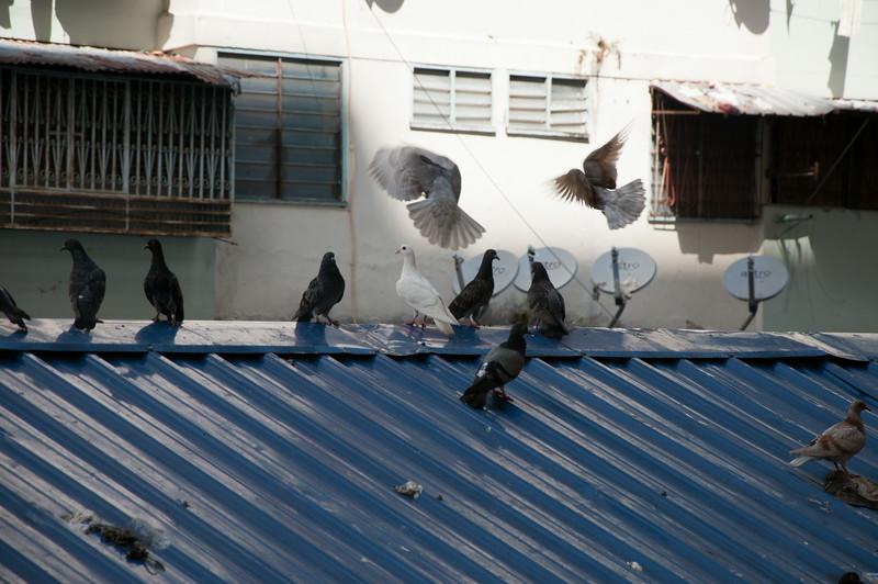 20091213 - 17135 of 17716 - 2009 12 13 - 12 15 001-003 Trip to Penang Island.jpg