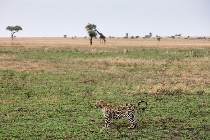 Africa - 101616 - 3885.jpg