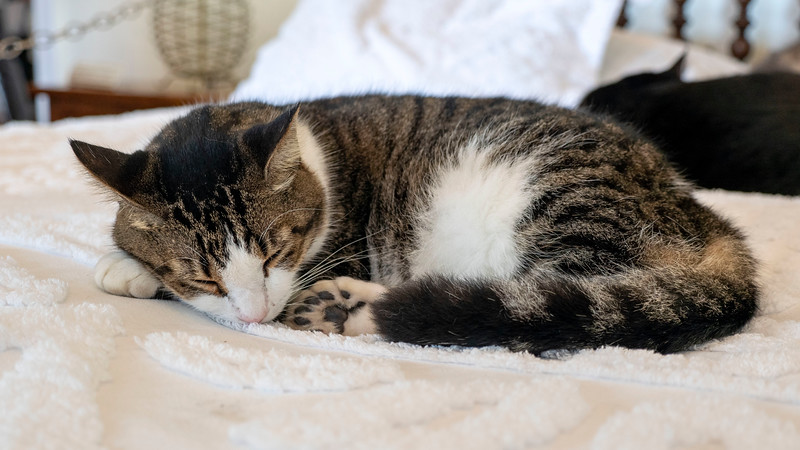 Florida-Keys-Key-West-Hemingway-Home-Cats-03.jpg