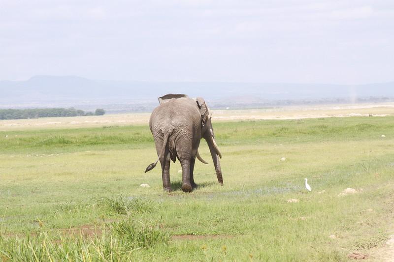 Kenya 2019 #2 898.JPG
