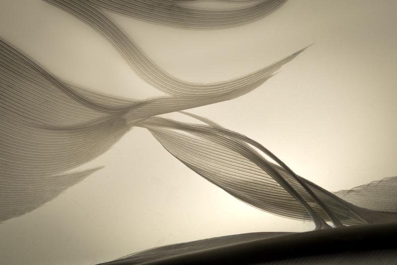 CAROL_HORIGAN_The Shape of   Flight_The Structure of Grace.jpg