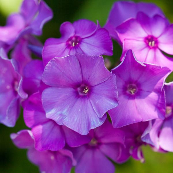 2009 06 30_NY Botanical Gardens_0750_edited-1.jpg