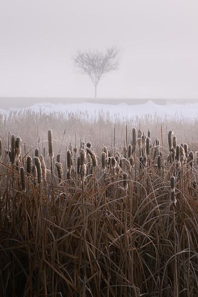 20191206KW-Foggy_Winter_Morning.jpg