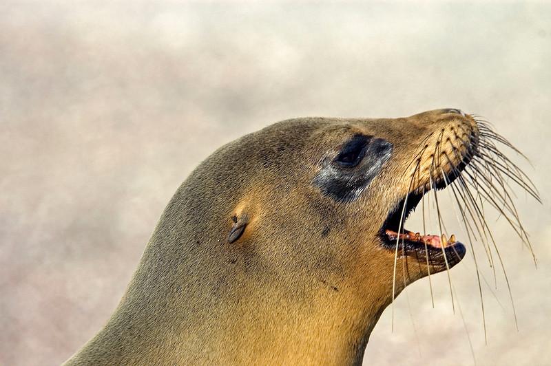 Galapagos Sea Lions-7.jpg