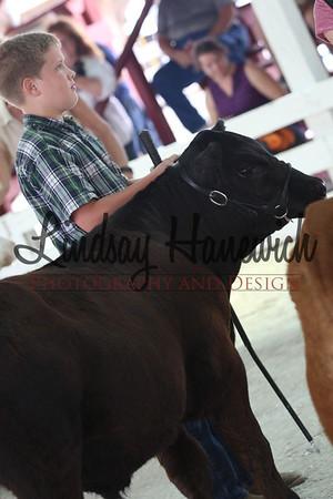 Ringshots - Market Steers