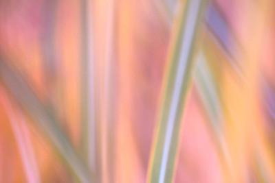 Plants: Impressions