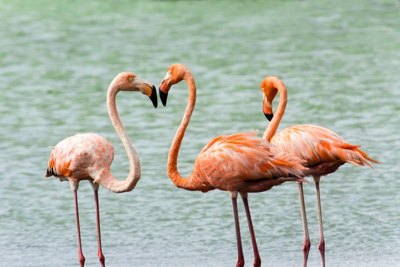 Flamingo Group2-.jpg