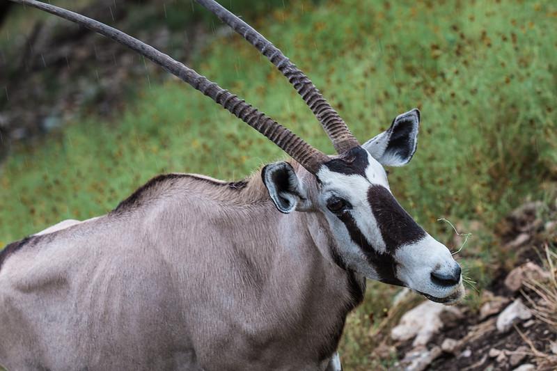 Wildlife Ranch-0356.jpg