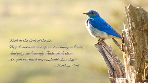 Scripture Photos