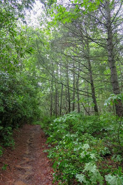 Barnett Branch Trail -- 3,260'