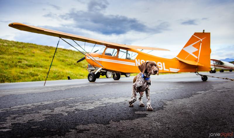 Dog and Plane - Alaska