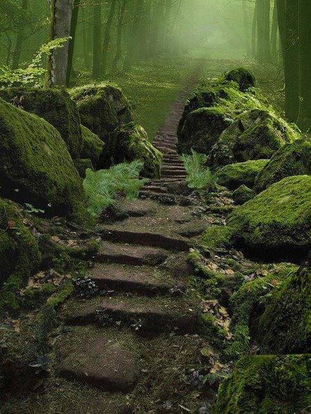 SherwoodForestK Royal Forest in Nottinghamshire, England.jpg