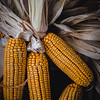 Corn-003