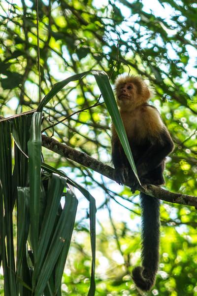 Costa Rica 2015-1572.jpg
