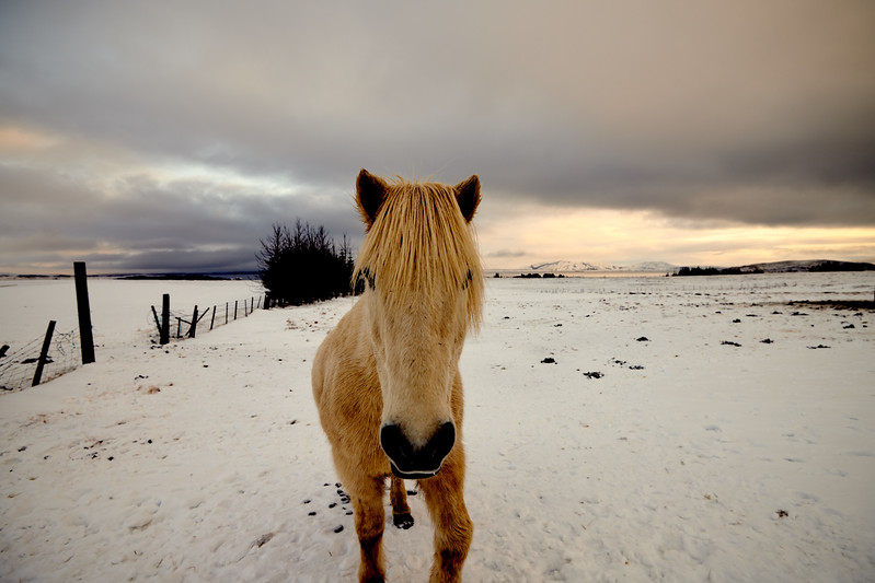 IcelandSelectsD85_1313.jpg