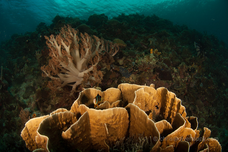 tubbataha-reef-2017-divehappy-chris-mitchell-14.jpg