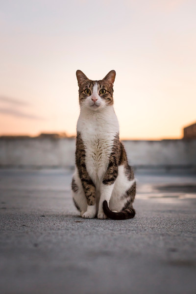 Meir & Hemdat - cat portraits