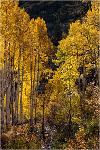 JM8_7946 Aspens and creek LPN.jpg
