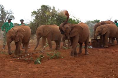 Kenya - Friends of Ngong Road Visit Day 10 - Amboseli National Park 3-19-12