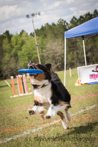 _MG_3111Up_dog_International_2016_StephaniellenPhotography.jpg