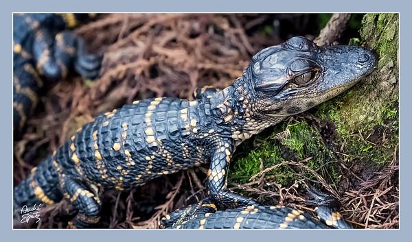 The Corkscrew Swamp Sanctuary - Florida