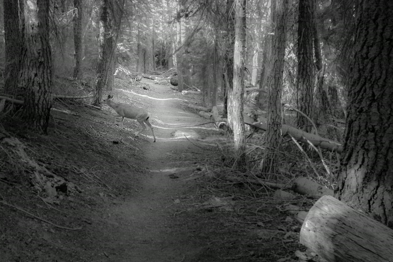 20140826_sequoia_0328.jpg