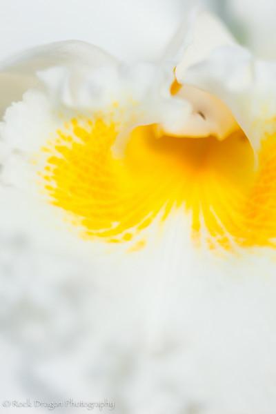 zoo_flowers-17.jpg