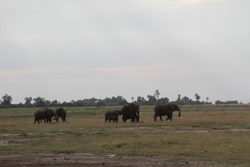 Kenya 2019 #2 294.JPG