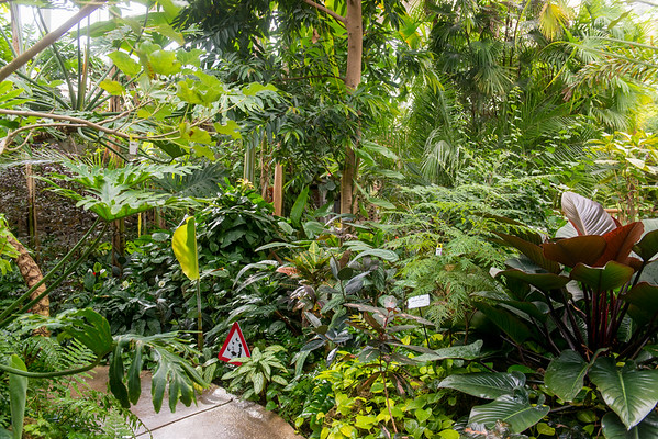 MYTP Jungle Book