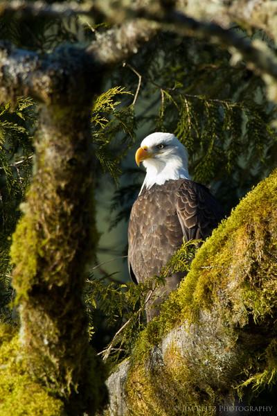 Skagit River float trip to photograph eagles. Dec 31, 2010.