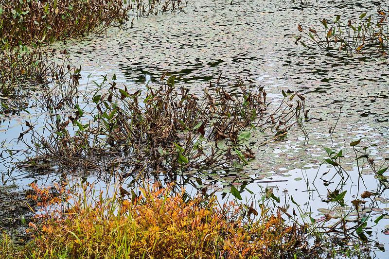 Water Plants 1