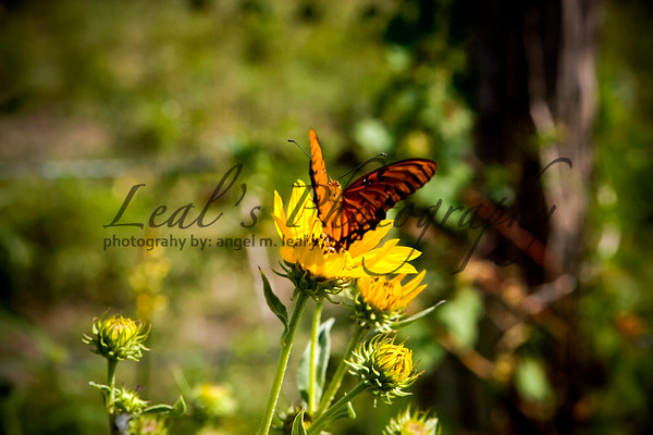 Nature and Wild Life