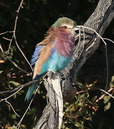 Birds by Species Okavango Delta Botswana 2008 2018