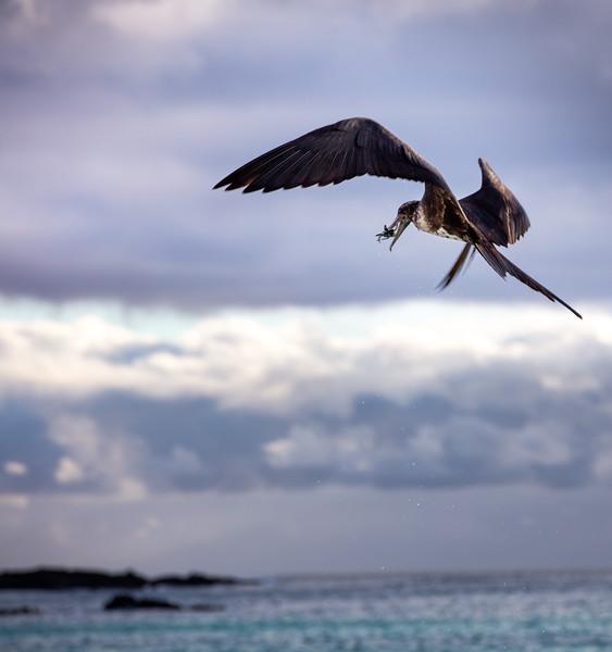 San Cristóbal (Chatham) Island, Galapagos with J, L & L Davis
