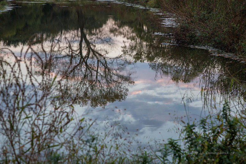 Sunset Reflections Tall Pine State Preserve, Mantua, New Jersey