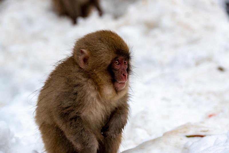 Monkey20190202.jpg