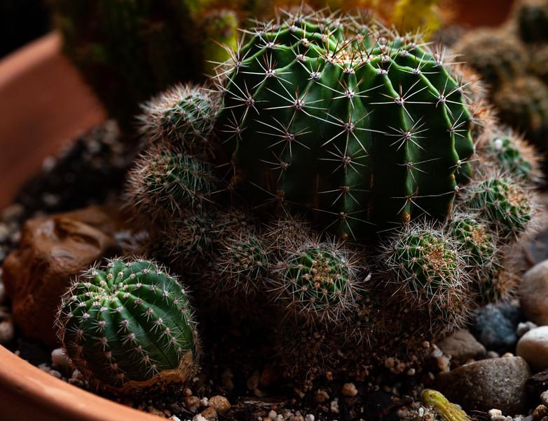 cactus  051620-3160.jpg