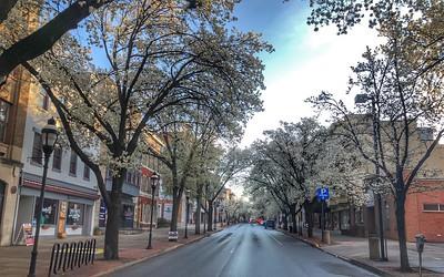 Springtime York 2020