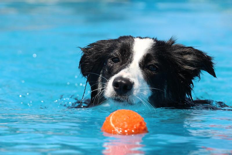 2015.8.6 Winnebago County Fair Dock Dogs (21).JPG