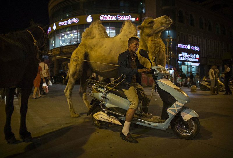 . KASHGAR, CHINA - AUGUST 02: A Uyghur man rides a scooter as he pulls his camel and horse on August 2, 2014 in Kashgar, Xinjiang Province, China. Nearly 100 people have been killed in unrest in the restive Xinjiang Province in the last week in what authorities say is terrorism but advocacy groups claim is a result of a government crackdown to silence opposition to its policies. China\'s Muslim Uyghur ethnic group faces cultural and religious restrictions by the Chinese government. Beijing says it is investing heavily in the Xinjiang region but Uyghurs are increasingly dissatisfied with the influx of Han Chinese and uneven economic development.  (Photo by Kevin Frayer/Getty Images)