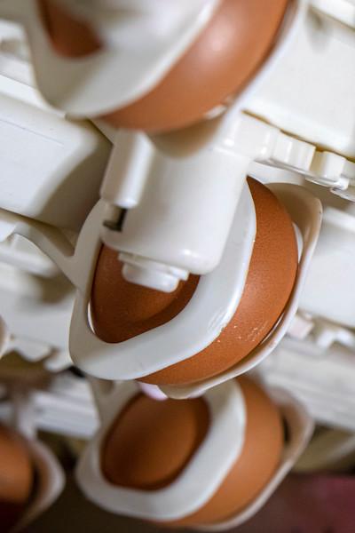 Eggs 15.jpg
