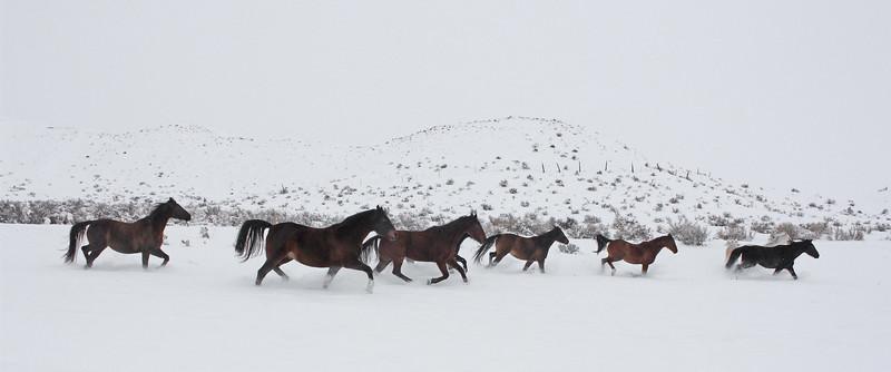Dashing through the Owyhee snow