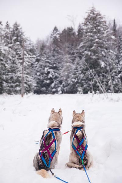 Winterdance-Dogsledding-Haliburton