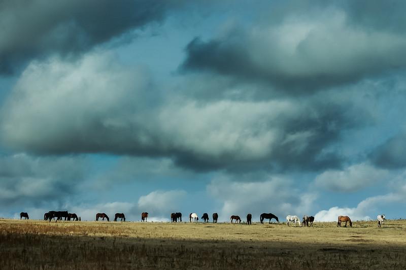Wild Horses Under Big Sky #4