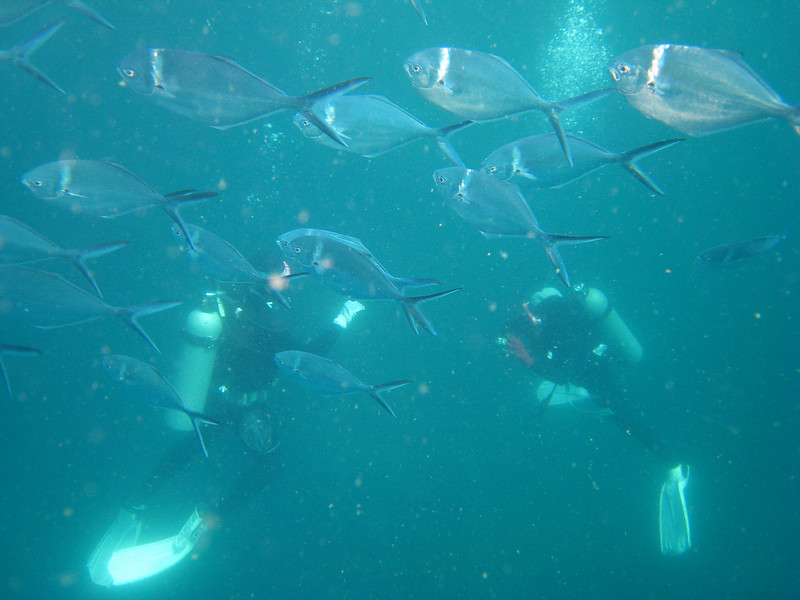 Diving in the Galapagos (201 of 392)