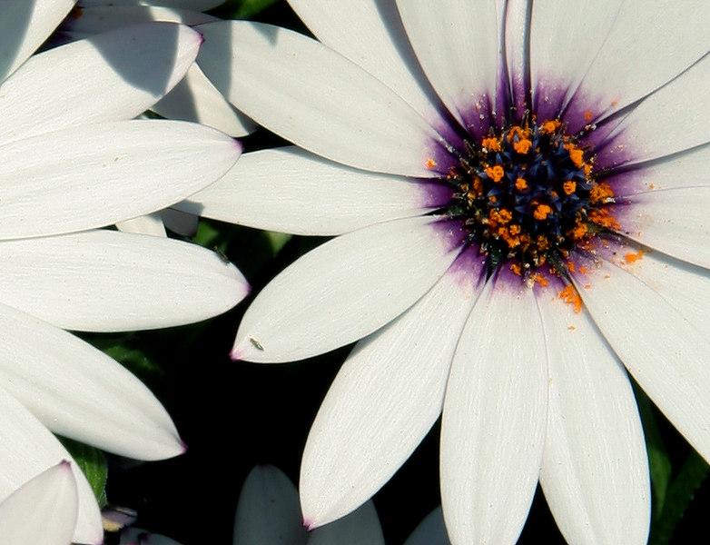 saturday flower.jpg